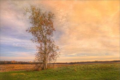 Jerry Freedner, 'Farm Fields 11', 2013