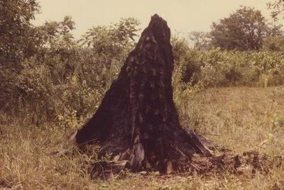 Ana Mendieta, 'Silueta Series (Tree of Life Series)', 1978