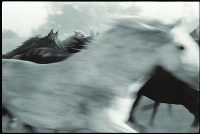 Tony King, 'The Grey'