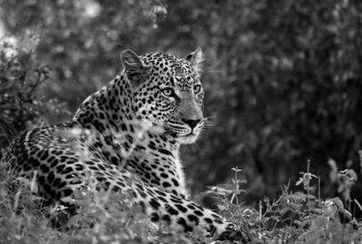 Araquém Alcântara, 'Leopard II, Tanzania', 2009