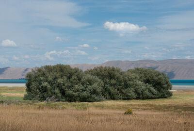 Robert Welkie, 'Cloud Above Trees Near Garden City, Utah', 2016