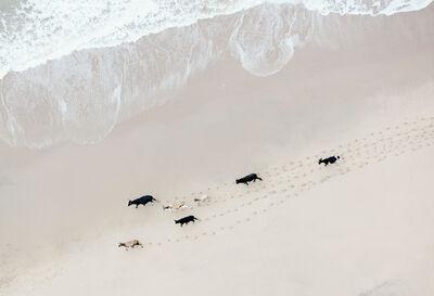 Zack Seckler, 'Wild Coast Herd', 2015