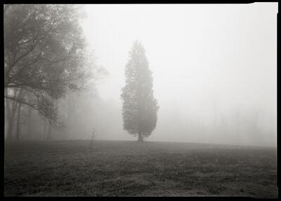 Linda Foard Roberts, 'Cedar Tree ', 2007