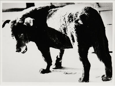 Daido Moriyama, 'Stray Dog, Misawa', 1971-printed c. 2002