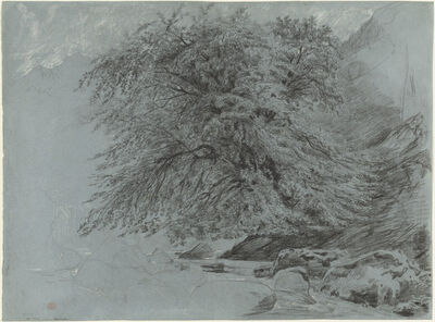 Paul Huet, 'A Wild Beech in Full Leaf', 1858