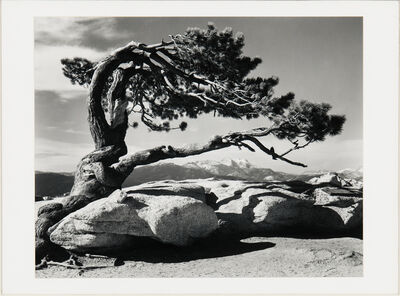 Ansel Adams, 'Jeffrey Pine, Sentinel Dome', 1940 printed later