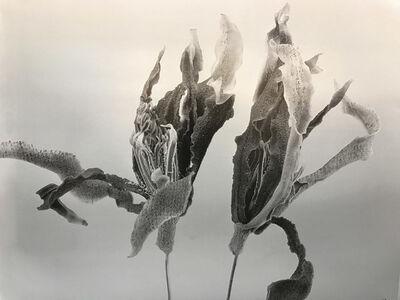 Chu Chu  儲楚, 'Gardenia-Forever', 2011-2017
