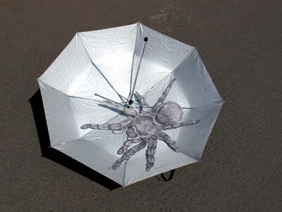 Araña en paraguas