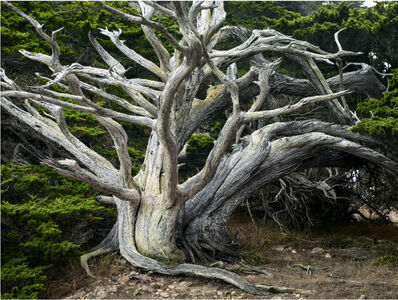 David Reinfeld, 'Forest 2', 2012