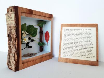 MMXII Camphor Cinnamomum Camphora Cape Town Collection-rarities and Natural curiosities DOCUMENTA