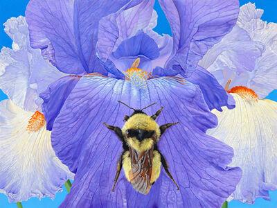 Iris with Bumble Bee