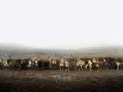 Kevin Boyle, 'Cattle Call and 7 Cowboys', 2016