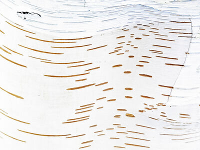 Birch Swirl