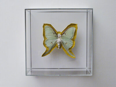 Esther Traugot, 'Luna Moth', 2019