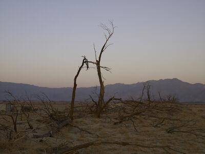 Richard Misrach, 'Dead Trees, Anza Borrego Desert, California', 2008