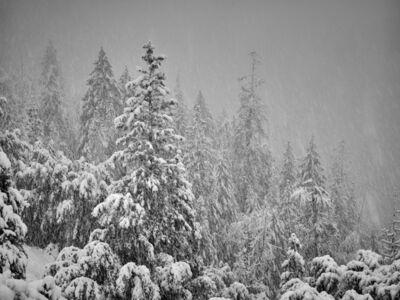 Snow Storm, Yosemite, CA