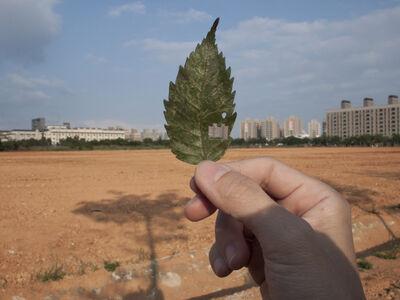 Yahui Wang, 'Leaf holes no.1  ', 2011