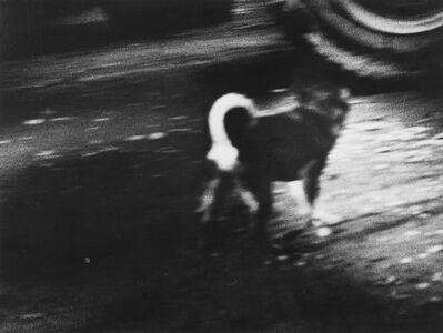 Daido Moriyama, 'On the Road', 1969