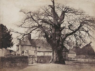 The Oak Tree in Winter, Hawkhurst, Kent, UK