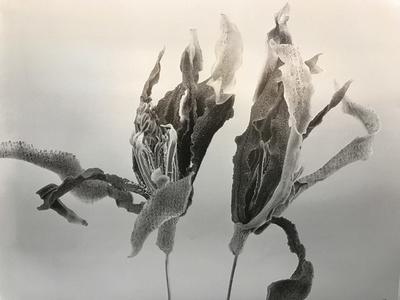 Gardenia-Forever
