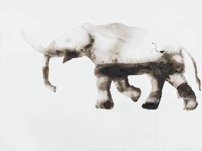 American Mastodon Mammut americanum (Tighe Triangle, Manhattan)
