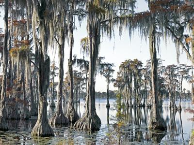 """""""Swamp III"""" 1/5"""