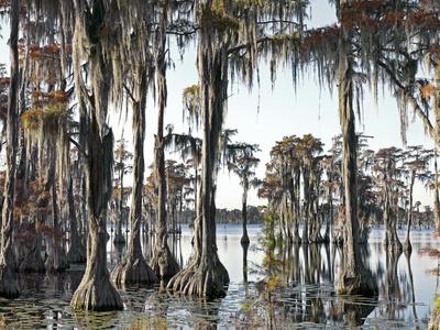 Swamp III