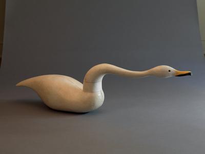 Reaching Swan