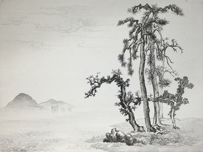 New Classic of Mountains and Seas- Pine Tree