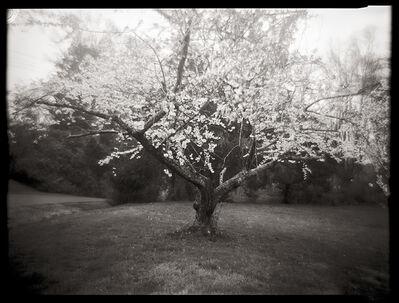 Linda Foard Roberts, 'Cherry Tree', 2003