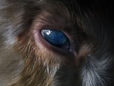 Perttu Saksa, 'Presence (Eye)', 2015