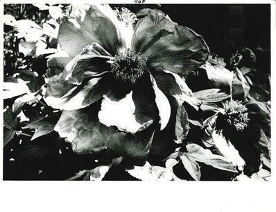 Daido Moriyama, 'Light and Shadow 1: (Flower)', 1981