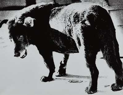 Daido Moriyama, 'Stray Dog, Misawa, Aomori', 1971