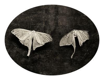 Linda Foard Roberts, 'Soulmate Moths', 2003