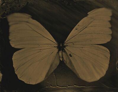 Lara Porzak, 'Flutterby', 2014