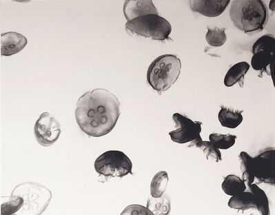 Ashley Oubré, 'Jelly Fish (untitled)', 2017