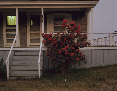 Joel Meyerowitz, 'Roses, Provincetown, Massachusetts', 1977