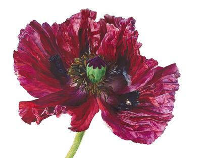 Rosie Sanders, 'Red Poppy'