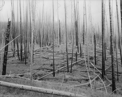 David Benjamin Sherry, 'Gates of Wrath (Summer of Fire), Wyoming', 2014