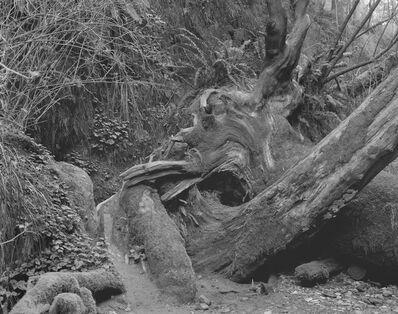 David Benjamin Sherry, 'Throbbing Emergency Portal, Open In My Night, Orick, California', 2015