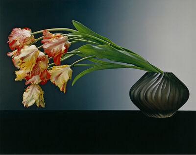 Robert Mapplethorpe, 'Parrot Tulips', 1988