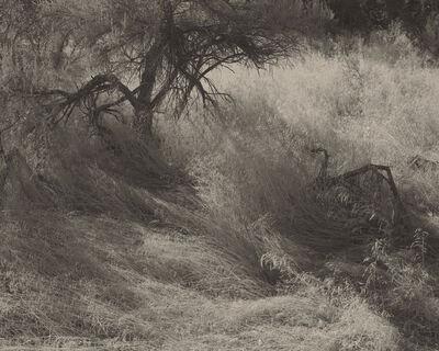 "Koichiro Kurita, '""Haze"" San Juan River, NM', 2000"