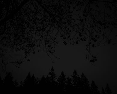Chris Bennett, 'From the series Darkwood, #26', 2014