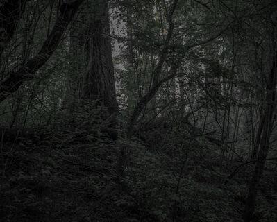 Chris Bennett, 'From the series Darkwood, #21', 2014