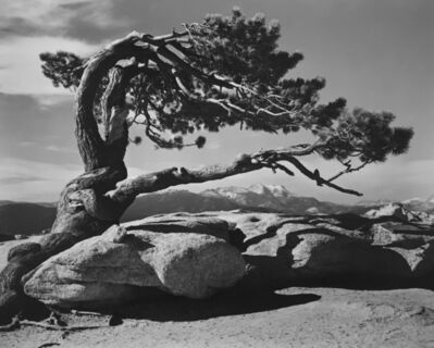 Ansel Adams, 'Jeffrey Pine, Sentinel Dome, Yosemite National Park', 1940