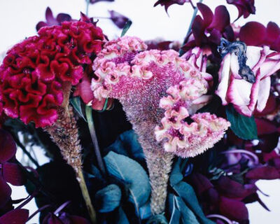 Nobuyoshi Araki, 'Untitled, from the series »Flowers & Jamorinsky«', 2005-2006