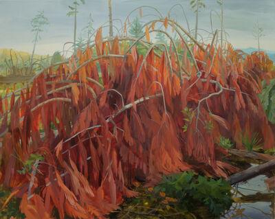 Kristin Musgnug, 'Downed Cedar', 2016