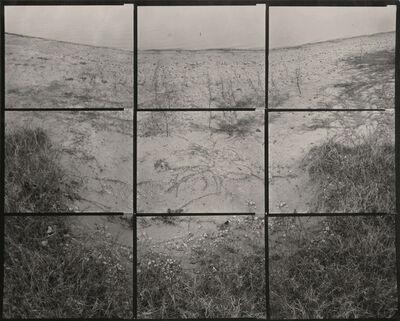 """Koichiro Kurita, '""""Creeping Grass"""" Austin, TX', 2003"""