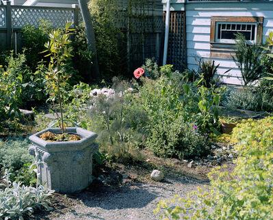 Jeff Wall, 'Poppies in a Garden', 2006