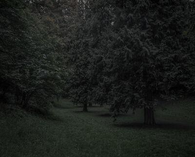 Chris Bennett, 'From the series Darkwood, #22', 2014